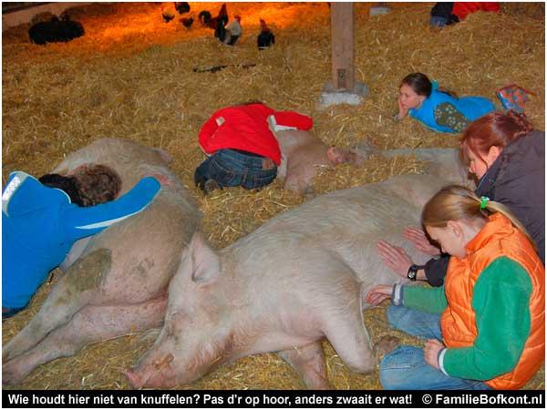 Varkens knuffelen brabant