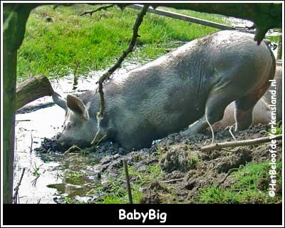 BabyBig