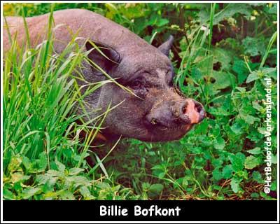 Billie Bofkont