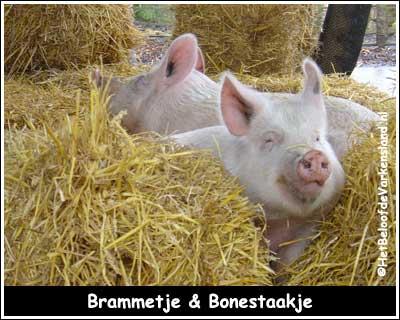 Brammetje & Bonestaakje