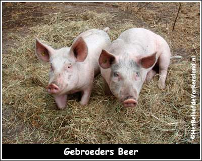 Gebroeders Beer