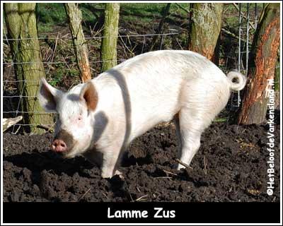 Lamme Zus