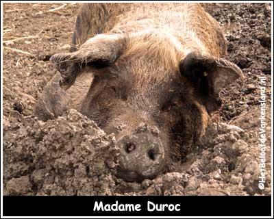 Madame Duroc